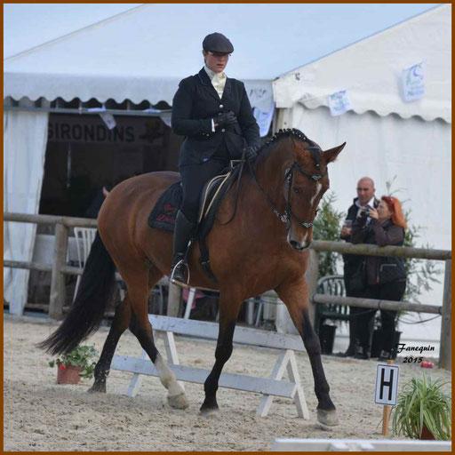 Épreuve de Dressage lors d'un concours d'Equitation de travail de chevaux Lusitaniens