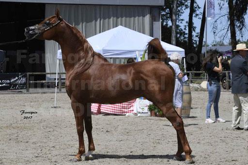 """Concours international de chevaux ARABES - """"Arabian Masters"""" Bordeaux 2017 - 8"""