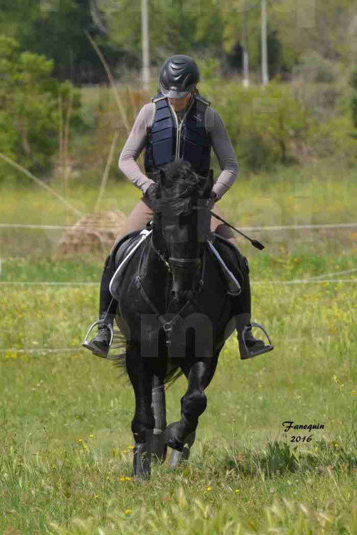 Elevage ARABOFRISON de Noémie CHARNAY - Étalon ARABOFRISON - ARDAN DU BELIER - 008