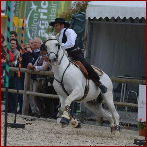 Épreuve de Maniabilité Chronométré lors d'un concours d'Equitation de travail de chevaux Lusitaniens