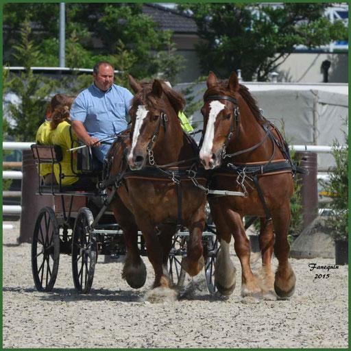 Attelage en Paire chevaux de trait