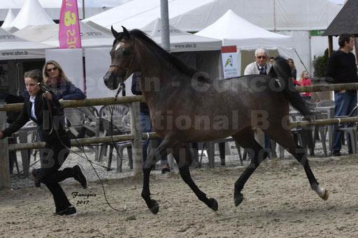 """Concours international de chevaux ARABES - """"Arabian Masters"""" Bordeaux 2017 - 7"""