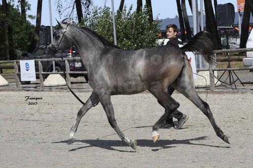 """Concours international de chevaux ARABES - """"Arabian Masters"""" Bordeaux 2017 - 3"""