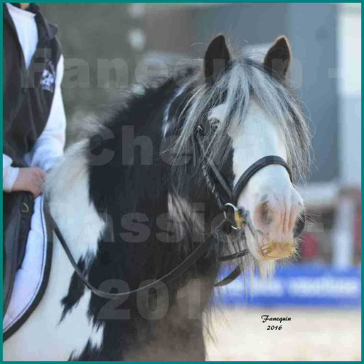 Cheval Passion 2016 - Cheval IRISH COB - Portrait