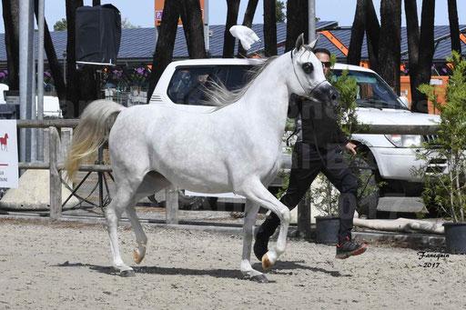 """Concours international de chevaux ARABES - """"Arabian Masters"""" Bordeaux 2017 - 1"""
