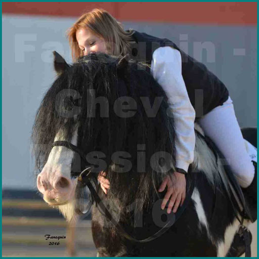 Cheval Passion 2016 - Cheval IRISH COB