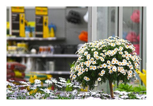 Blumen&Garten #03