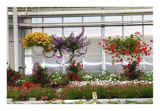 Blumen&Garten #02