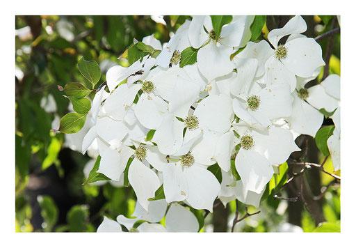 Blumen&Garten #11
