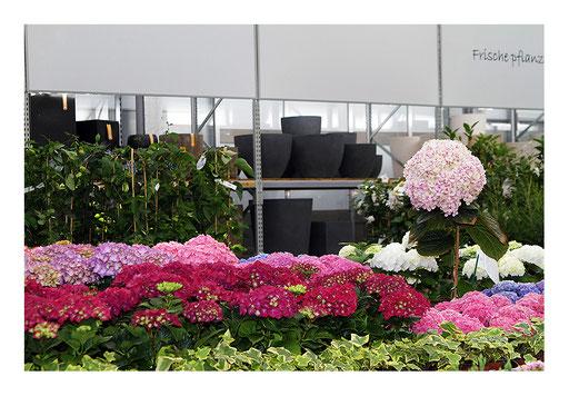Blumen&Garten #22