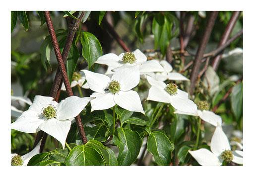 Blumen&Garten #12