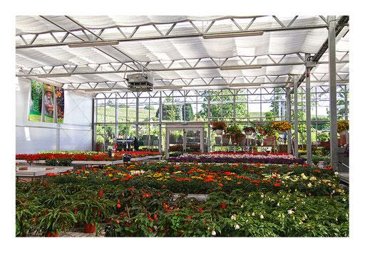Blumen&Garten #04