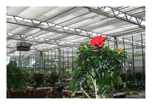 Blumen&Garten #06