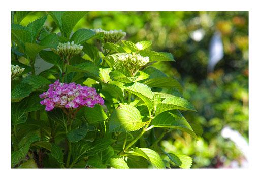 Blumen&Garten #013