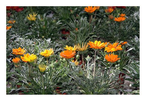 Blumen&Garten #07