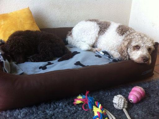 Baja und Monty