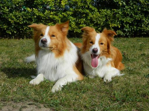 Duke und seine Schwester Nessaja
