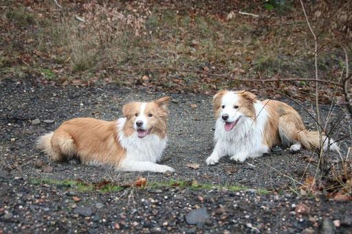 Duke und Bruder Patte