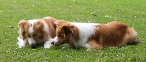 Leo und Duke