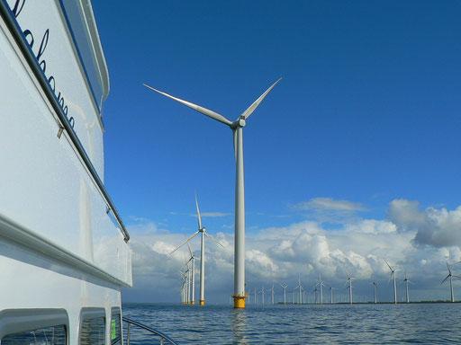 Der Windpark Westermeerwind bei Urk
