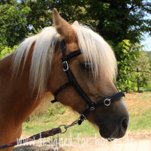 Kundenfoto Kappzaum Welsh A Pony, Maßanfertigung