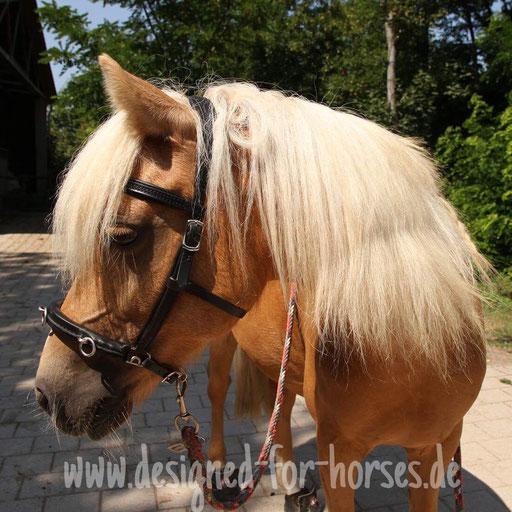 Kundenfoto Kappzaum nach Maß: Welsh A Pony