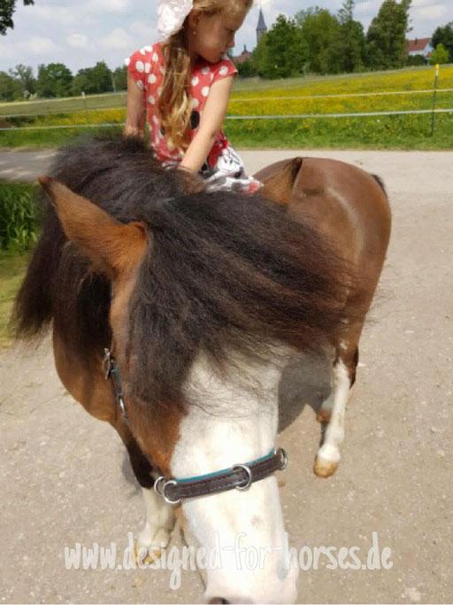 Kundenfoto 2: Murmelpony BimBam Welsh A Pony Lederkappzaum mit anatomisch geformtem Genickriemen und Bosalkinnriemen, Maßanfertigung