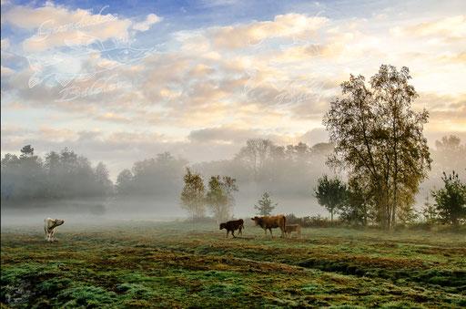 Herstliche Weide in Hechthausen/Kleinwörden