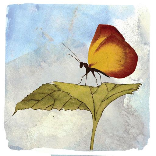 Schmetterling_Blüte, Aquarell Kunstdruck © Britta Jessen