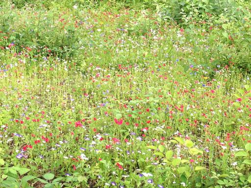 Blumenwiese am Wegeswand