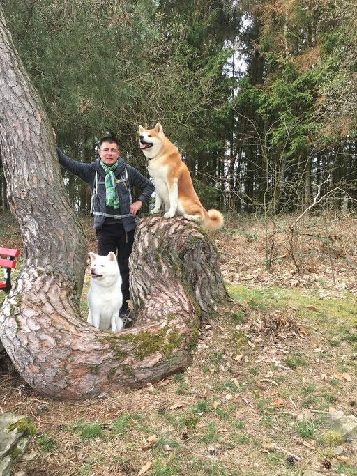 Bizarre Baumform