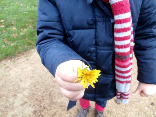 CE1 école élémentaire publique Le Chat perché Talensac - 24 novembre 2015