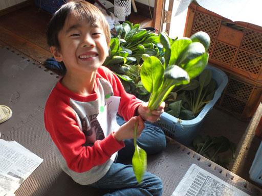 小松菜の調整をしている男の子の写真