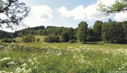 Wiesengebiet bei Stříbrné Hutě.