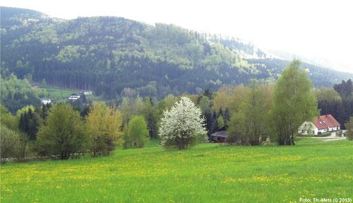 Südlich der Lainsitz/Lužnice mit Blick auf den Wolfsberg.