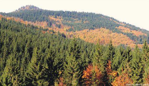 Die großen zusammenhängenden Waldgebiete im Freiwald und Novohradské hory, wie hier im Bereich des Ahornsteins, ...