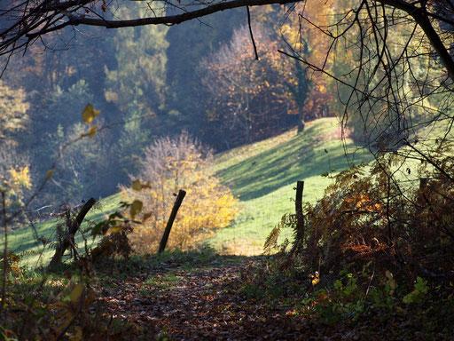 Herbstwanderung im Weinland