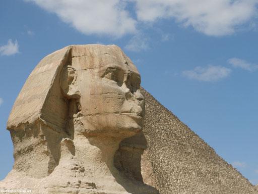 Der Große Sphinx von Gizeh - in Ägypten