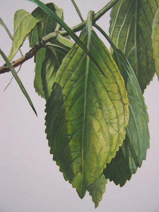 Désordre 4 (détail) - huile sur papier marouflé sur bois - 2017 - Didier Goguilly