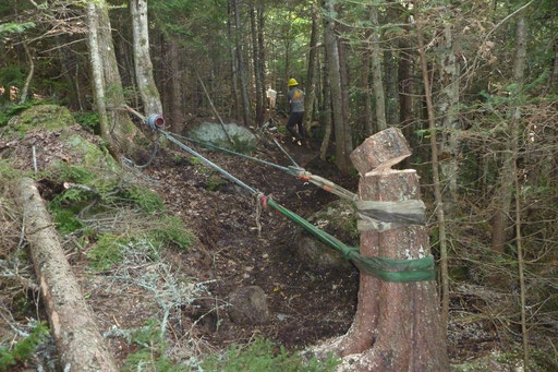 This large spruce stump needed some extra mechanical advantage