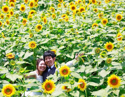 ひまわり畑の中前撮りを楽しむ新郎新婦様
