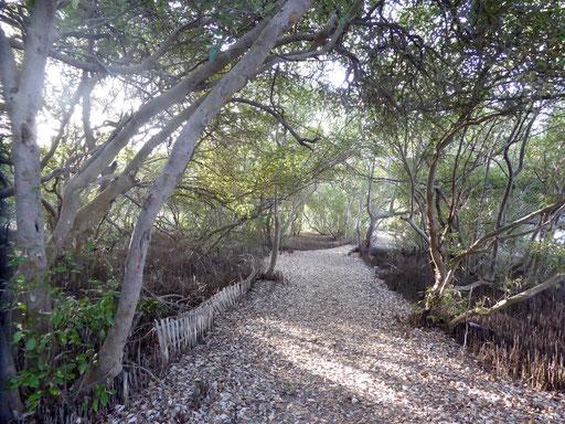 Bild: Mangrovenweg am See der Insel Gili Meno