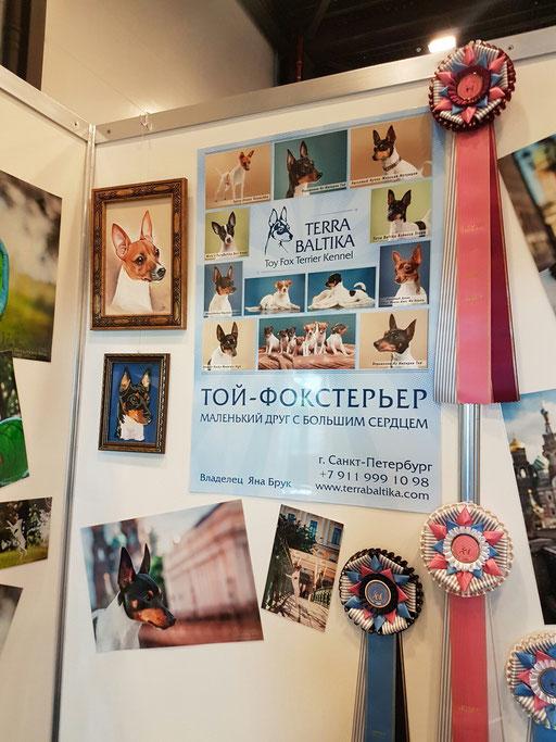 Стенд Той-фокстерьер, выставка собак Белые Ночи 2017