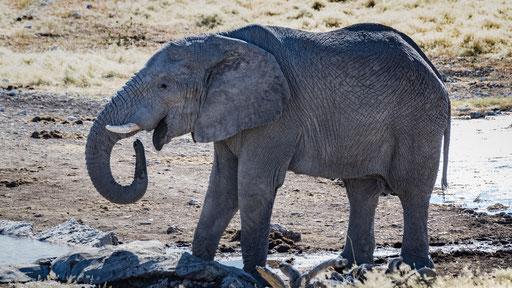 unser erster Elefant (Etoscha)