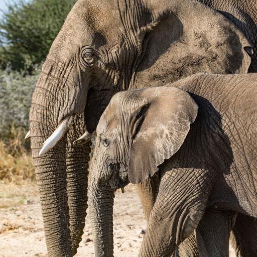 Elefantencollage