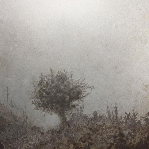 霧の中の木 Tree in the mist