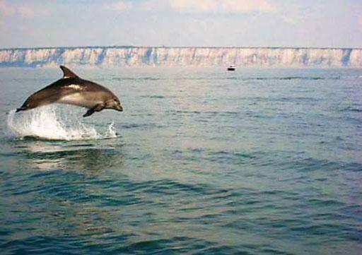 les dauphins vue en Baie de Somme Promenade en bateau la villa en baie JUIN 2020