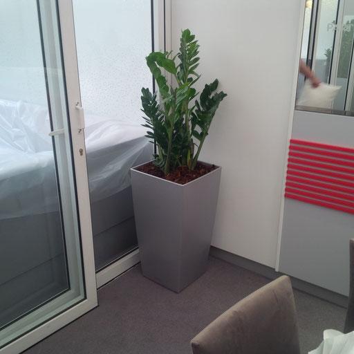 Location de plantes pour un salon VIP à Roland Garros