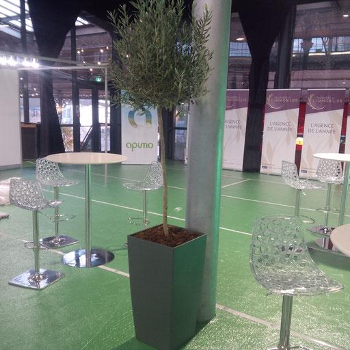 Location de plantes pour vos événements: Olivier