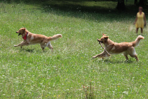 Bellis (rechts) und Brisco (links)